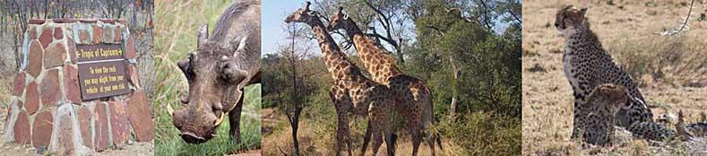 Kruger National Game Park