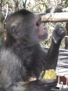 Monkey Sanctuary tours