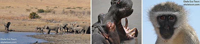Pilanesberg National-Game-Park