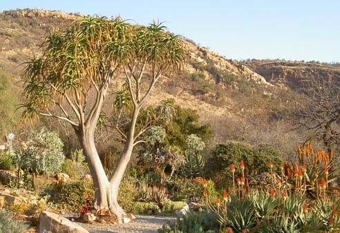 Walter Sisulu Botanical gardens, Johannesburg – Ekala Eco Tours