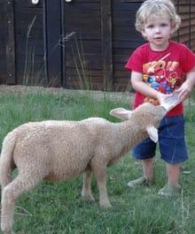 Ekala lamb feeding