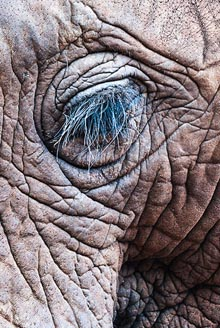 The Elephant Sanctuary close up eye